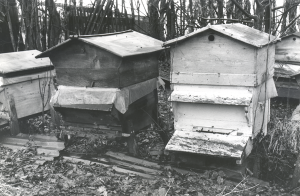 Histoire de l'apiculture
